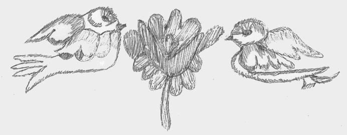 kathy's birds